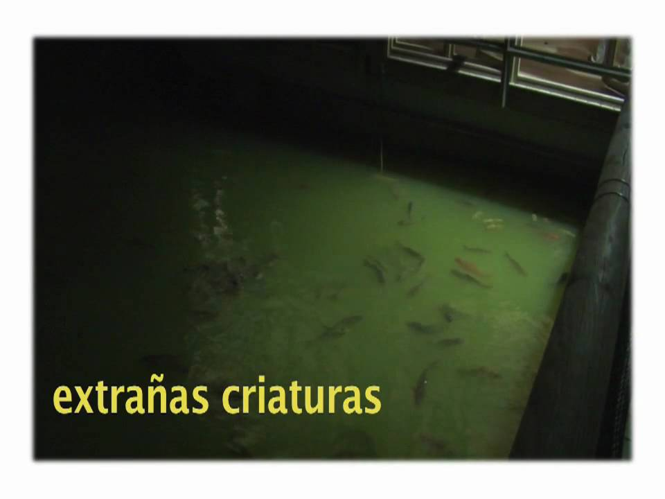 Cena Antiguos Alumnos Puertosol (2 Avance)